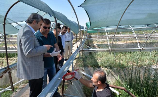 Kayseri'de ürettiği sülükleri 15 dolara ihraç ediyor.