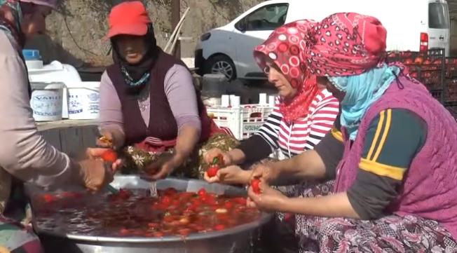 Kayseri'den kadın çiftçilere örnek olacak proje, bir başarı hikayesi!