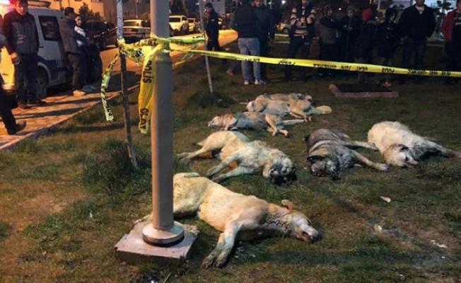 Ankara Batıkent'te köpek katliamı kan dondurdu!