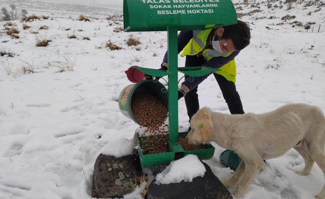 Talas'ın sokak hayvanları özel ekibi