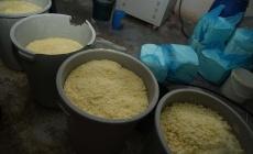 Bu peynirleri insanlara yedireceklerdi!